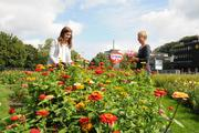 Dr.  Oetker employees pick flowers and donate to SOS Children's Villages